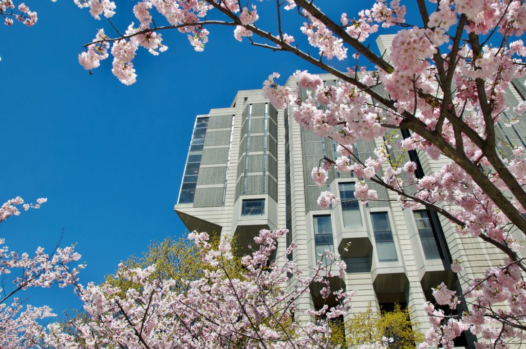 Partial view of Robarts Library from cherry blossoms.